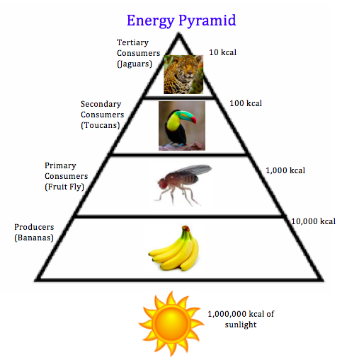 Where Is Energy In Food Stored